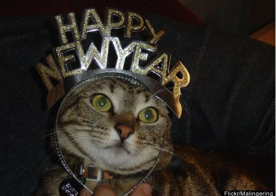 wishing i have cat readers and their respective furry friends a happy new year