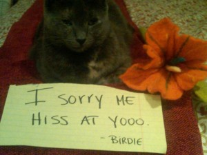 Cat writes an apology note