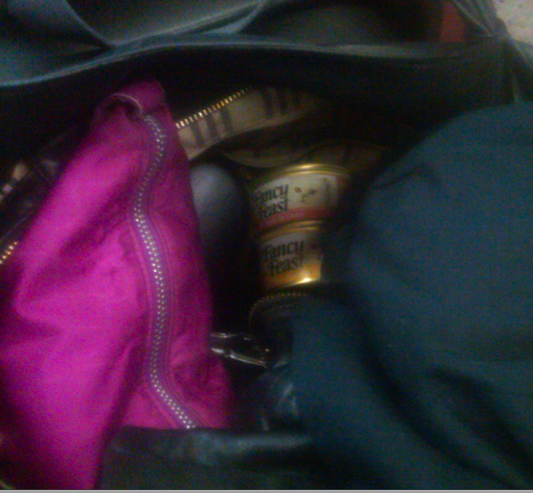 Went to jury duty with cat food in my purse