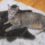 Cat poses on mini bear rug