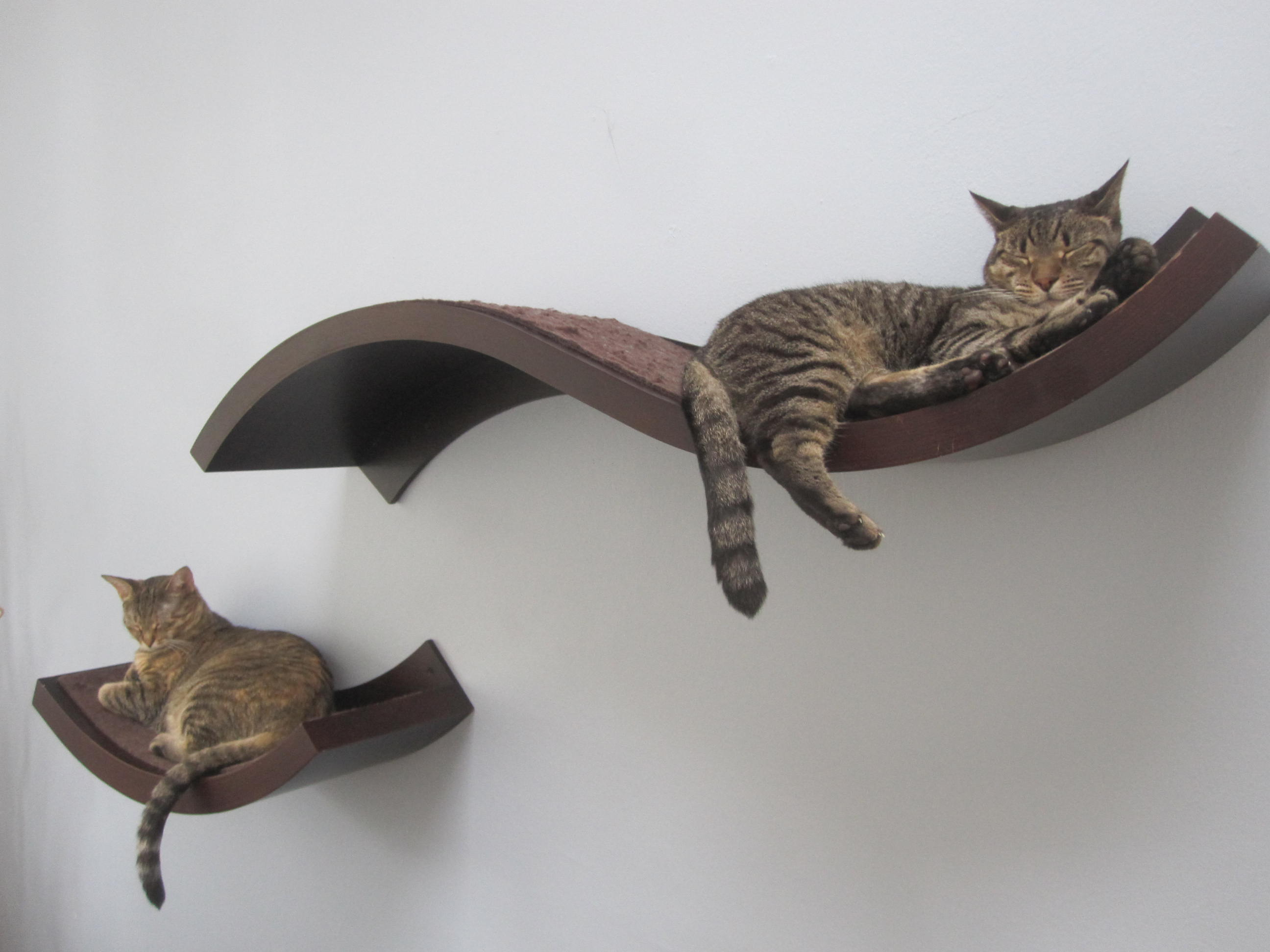 11 tips for a safe stylish kitty home i have cat for Cool cat perches