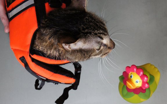 cat using water hydrotherapy