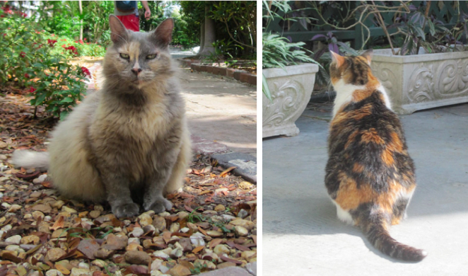 Cats at the Hemingway House