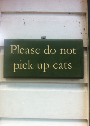 Don't Pick Up The Cats - Key West