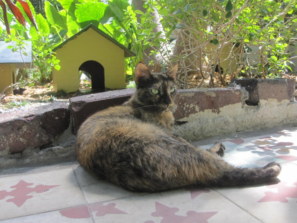 Tortie at the Hemingway House