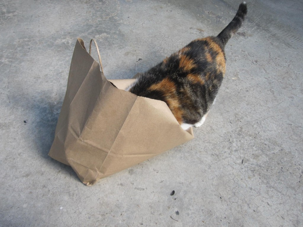 All cats love a paper bag! Guess these guys are no different!