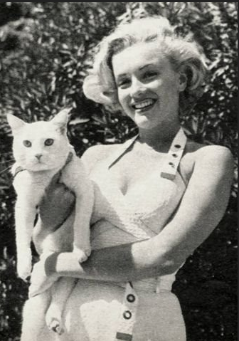 Marilyn Monroe and white cat