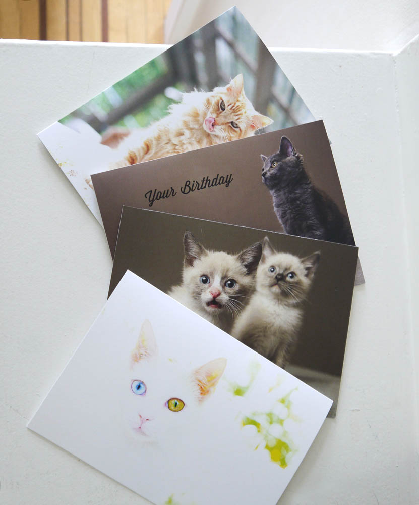 Cute Cat Cards
