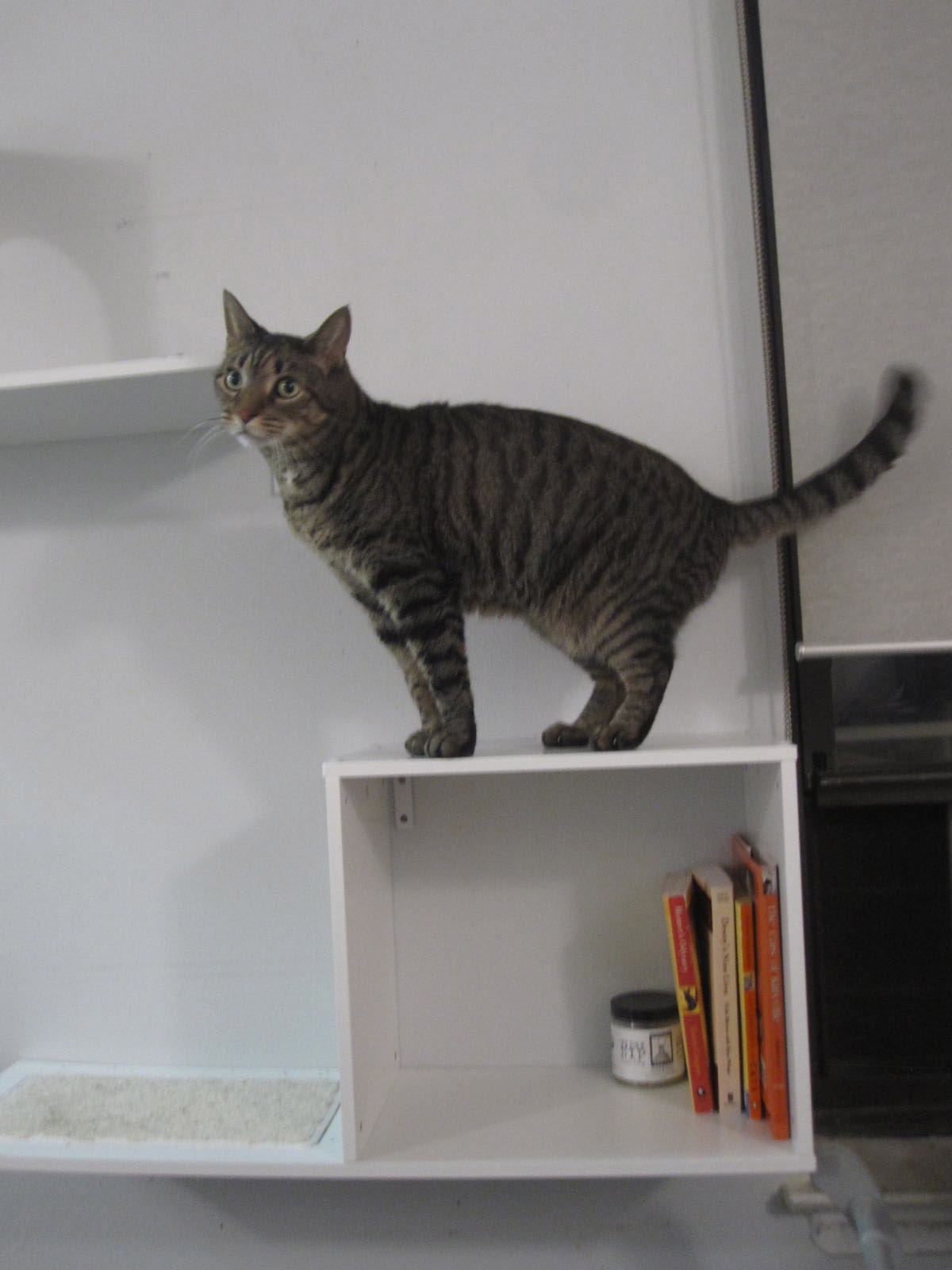 Cool Cat Shelves From Designer Pet Products I Have Cat
