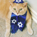 Jewish Cat, Rabbi cat