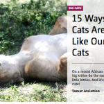 Catster 15 Ways Big Cats are Just Like Our Little Cats