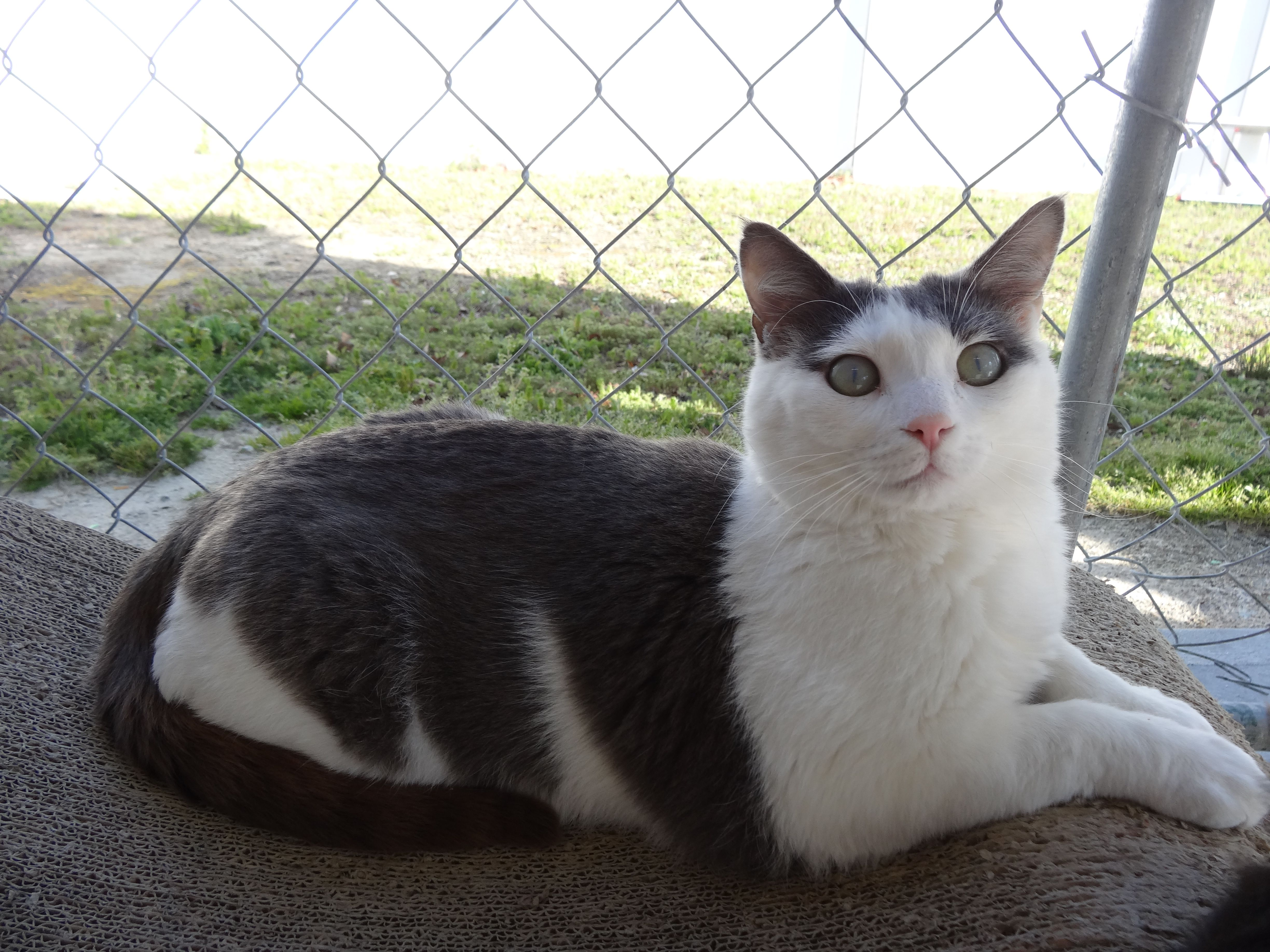 My Trip To Blind Cat Rescue And Sanctuary I Have Cat