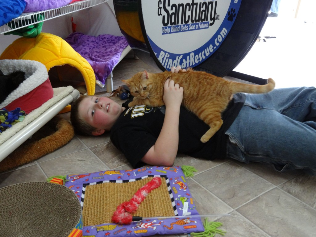 Blind Cat Animal Rescue and Sanctuary