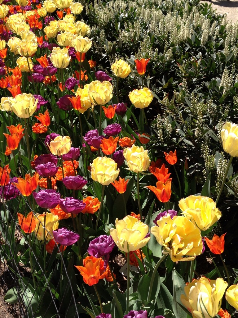 Flowers blooming in Madison Square Park