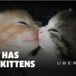 I CAN HAVE UBER KITTIES