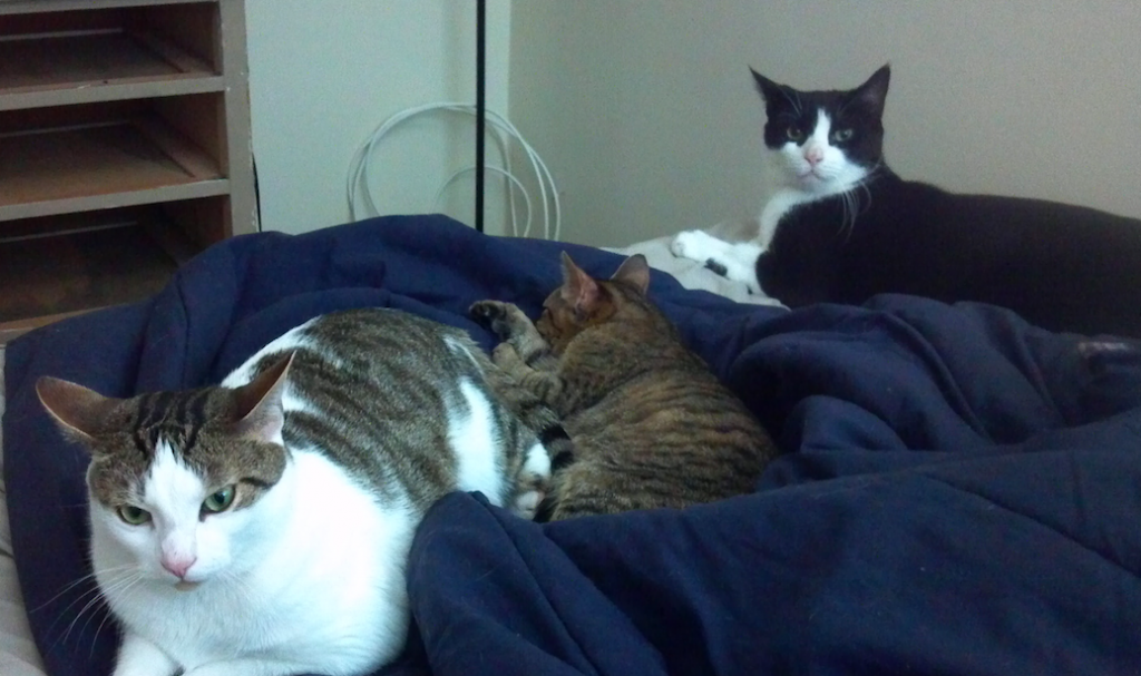 From left to right: Harley, Lilly and Quincy