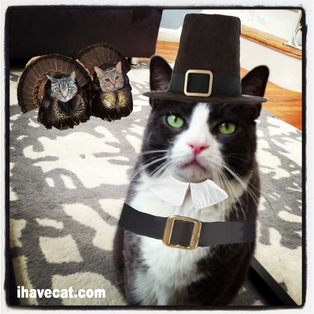 Happy Thanksgiving with Cats