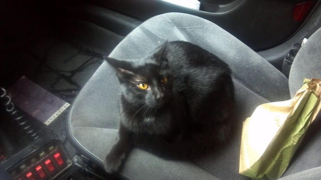 Jon Boyer rescued Moagli from the mean streets of Baltimore