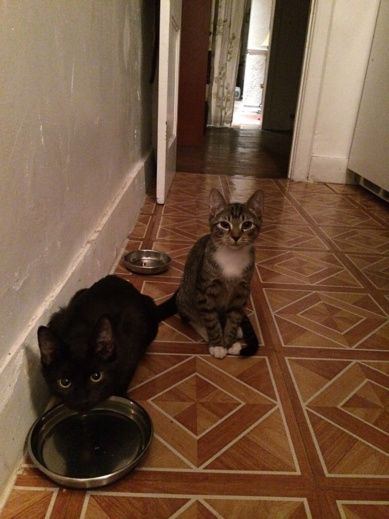 "August and Arthur ""say Feed Us Please"" (in their most polite manner possible)"