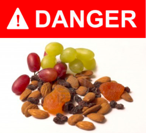 foods dangerous to cats