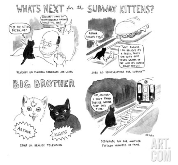 what's next for the Subway Kittens