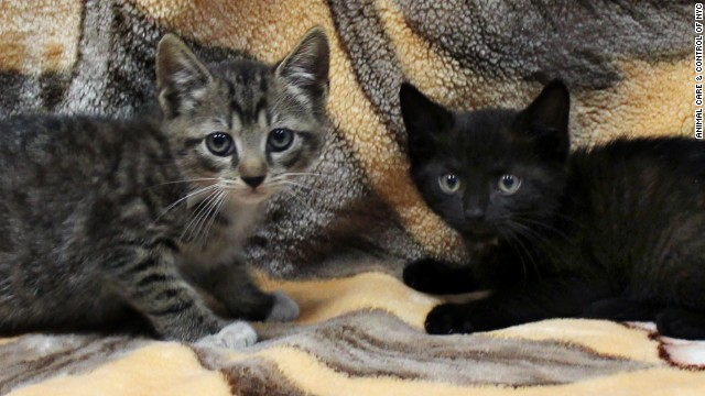 cnn subway-kittens-0830-story-top