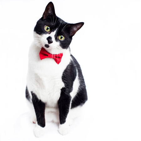 Sweet-Pickles-Cat-Bowtie-Collar