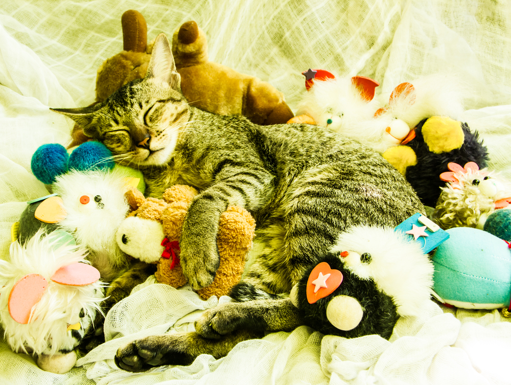 cat-with-old-toys