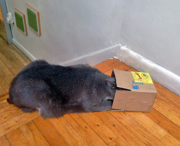 Cat with head in box