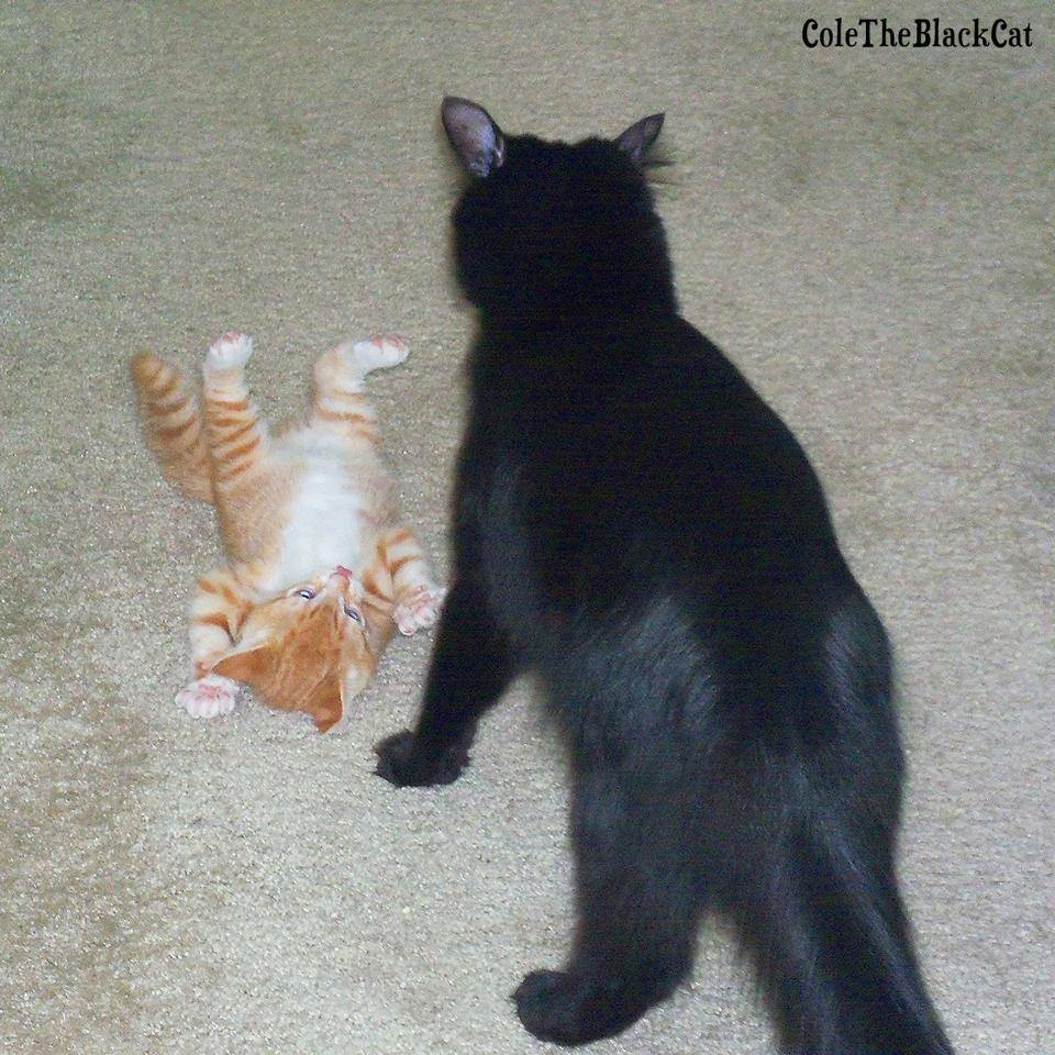 Baby Marm playing all submissive (let's see how long that lasts!)