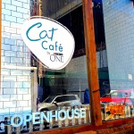 Purina One Cat Cafe NYC