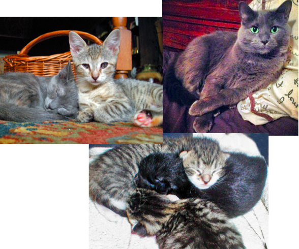 Clockwise from upper left: Birdie and my Haddie as kittens, Caterpiller, 2-14 April kittens!