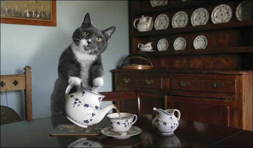 I wonder if Lauren can have her cats start serving the tea....