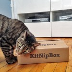 Kip and KitNipBox