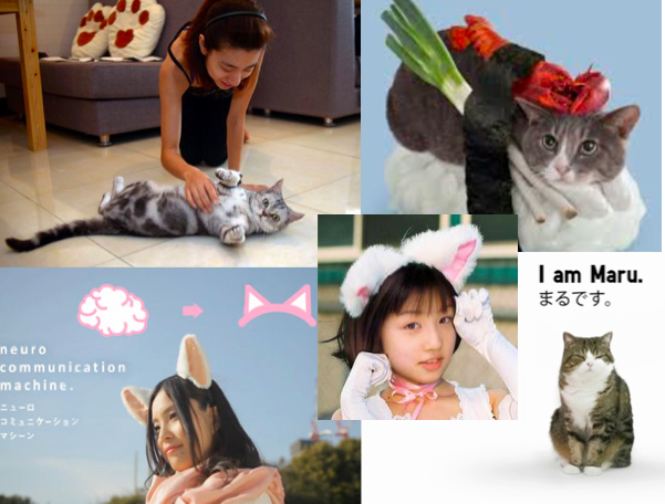 Japan's fascination with cats