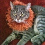 Ely Valy's cat Mish Mish - talk about making a bold fashion statement!