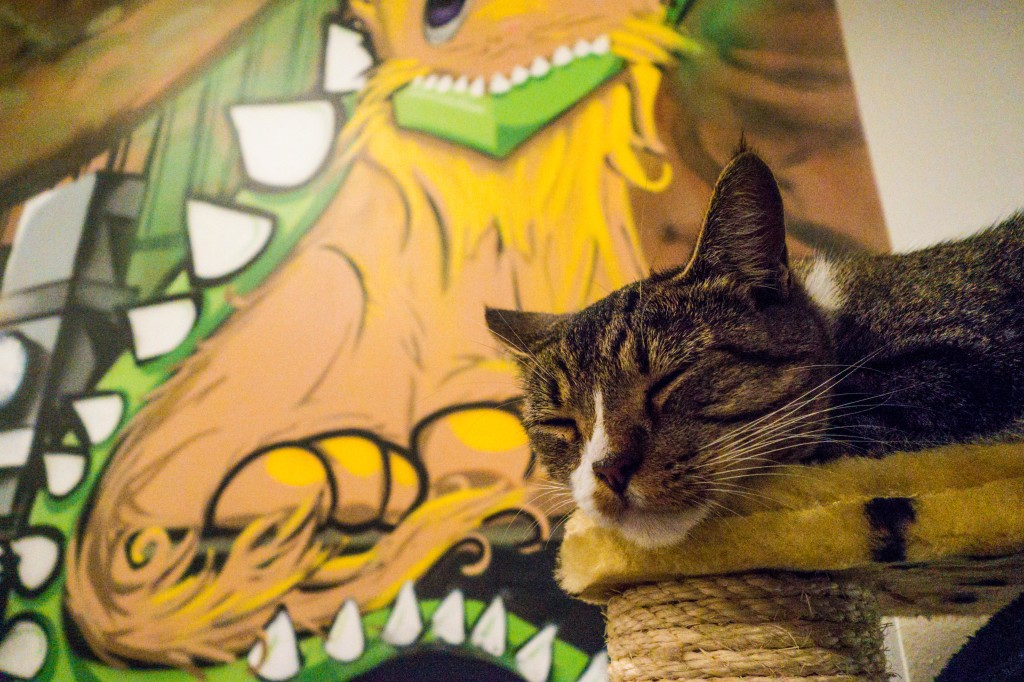 Last but not least, kitty #9, Fifa taking a snooze while she can!