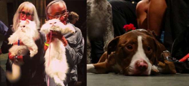 Blessing of the Animals at Saint John the Devine (2013)
