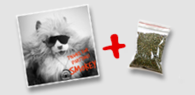 catnip dime bag and party cat