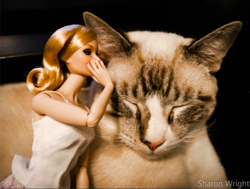secret-shhh cat and doll photography