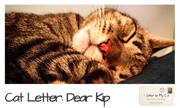 A Letter To My Cat alettertomycat.com