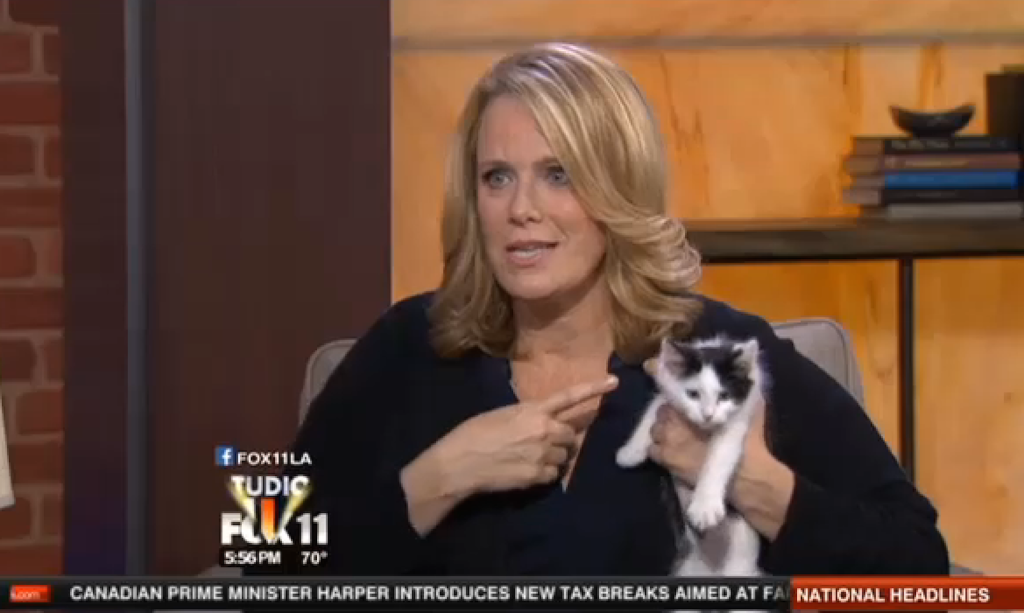 Lisa Erspamer on LAFox11 with kittens from Best Friends
