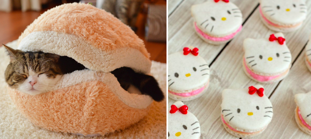 Maru in macaron bed and Hello Kitty macarons