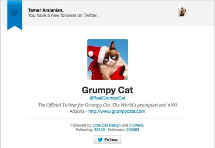 The Real Grumpy Cat Follows I HAVE CAT