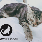 Meow Parlour opens in NYC