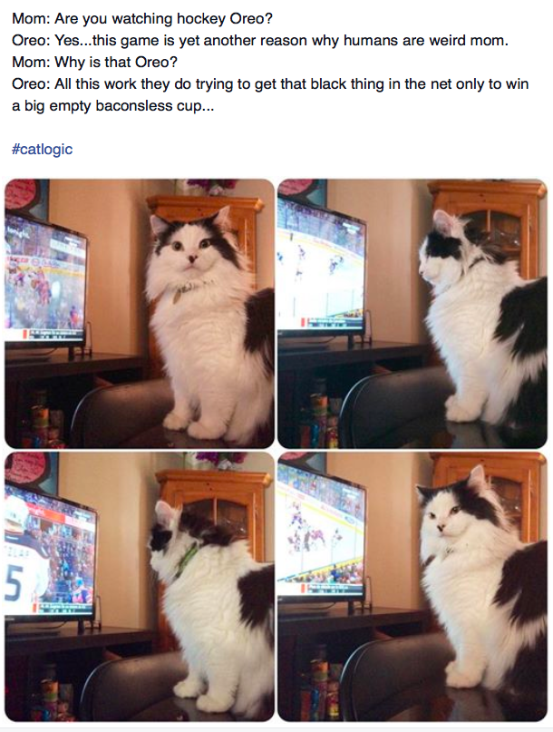 The Oreo Cat Facebook Page
