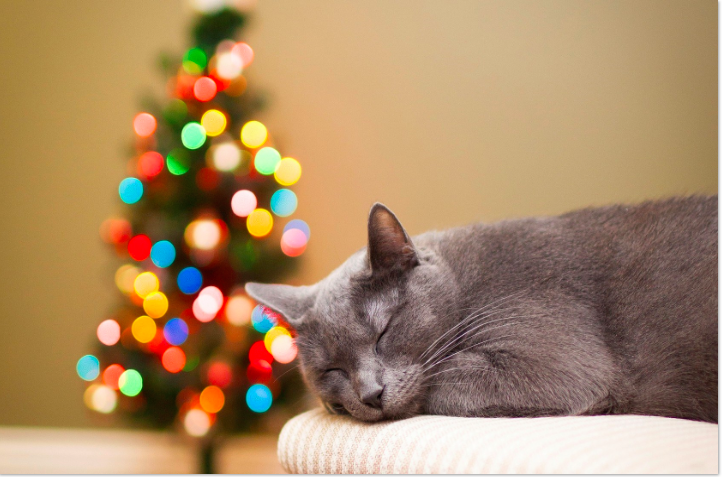 Tips for cat safety during the holidays