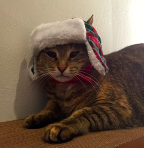 cat in holiday hat