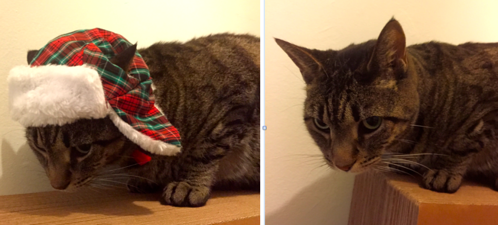 cat shamed by holiday hat