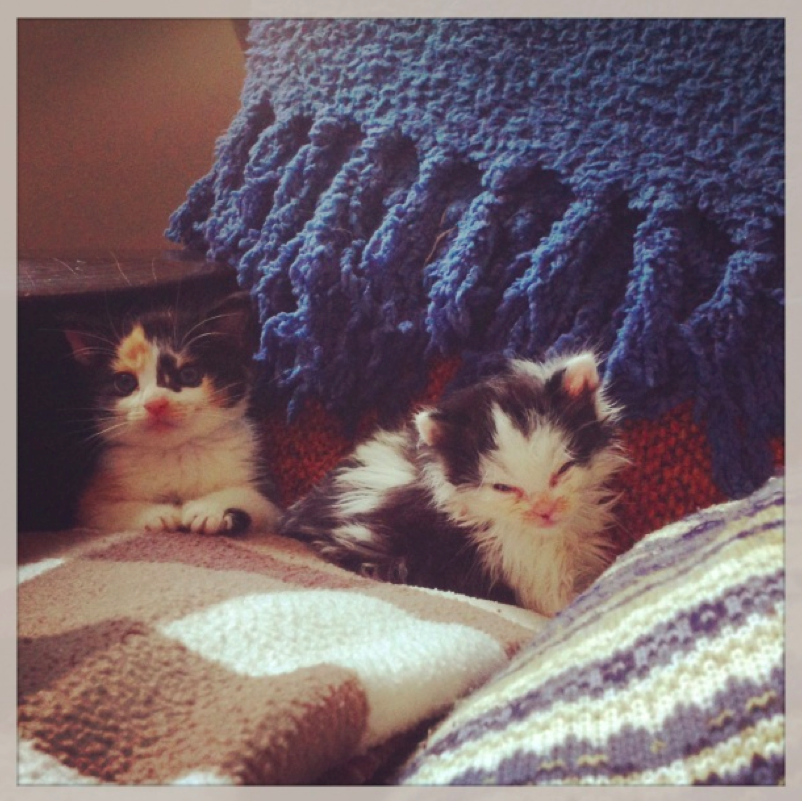 Baby Oreo Cat and Sister Patches